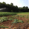 Summertime crops are surging!