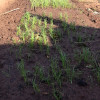 Spring Planting begins