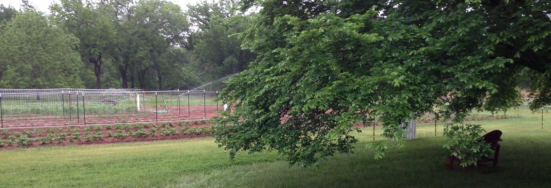 Elm Tree Garden