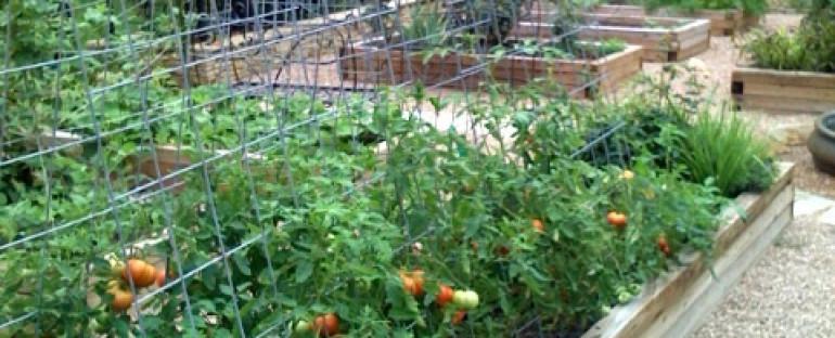 Tomato fruit set temperature
