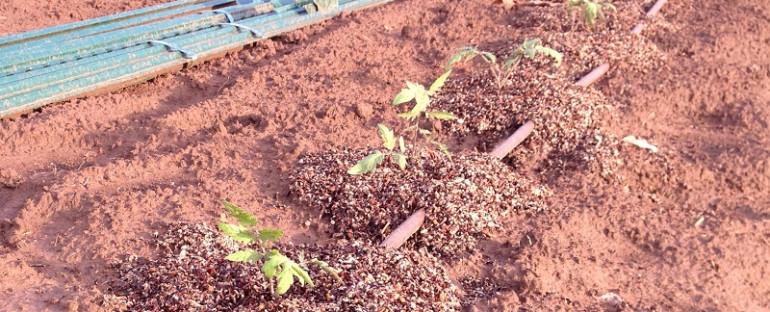 Tomatoes are planted, let the gardening season begin!