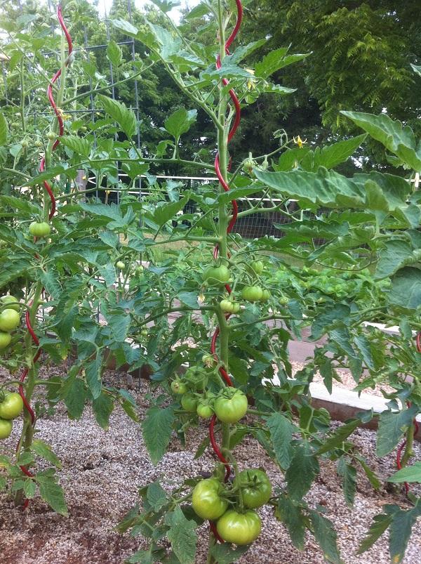 Trellis Material And Types 171 Elm Tree Garden
